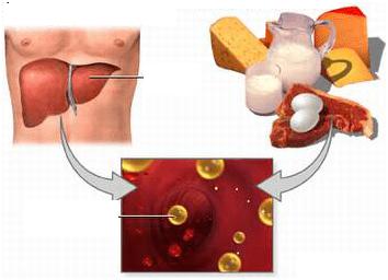 bệnh máu nhiễm mỡ là gì